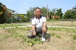 二崙村社區種藥草打造長壽村 翻轉老社區