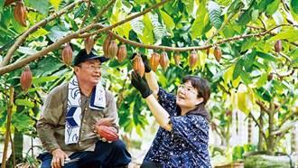 《商業周刊》種植可可樹的奇幻旅程》摸索10多年 可可樹在屏東生根了