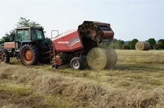 牧草球堆滿草原 走馬瀨農場奇景