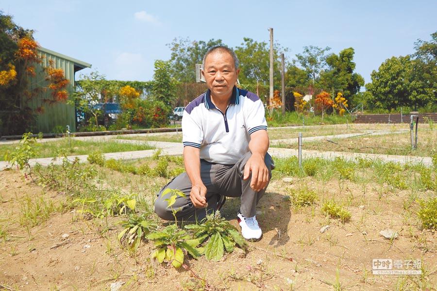 竹田鄉二崙村在屏東農夫黃穎的協助下,正朝長壽村的目標邁進中,他以無毒藥草做為社區營造的主角。(謝佳潾攝)