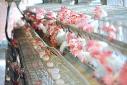 彰化 3雞蛋場驗出農藥超標 全台清查