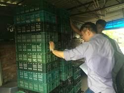 芬普尼毒蛋風波 高雄新增2畜牧場