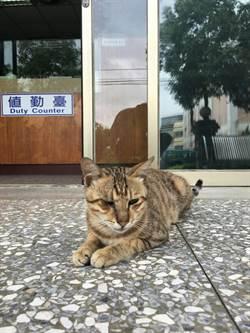 另類為民服務 獨眼流浪貓成三灣戶警兩所志工