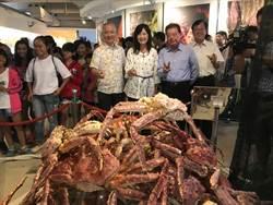 旗津貝殼館「蟹逅特展」 展全台最大巨型蟹球