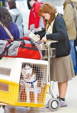 寵物搭機航空免責 消基會批無效