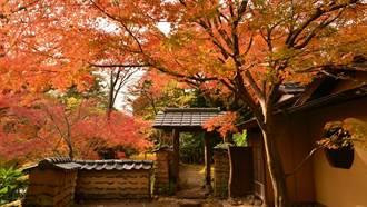 秋季紅葉美呆了!東京近郊5個賞楓秘境去過沒