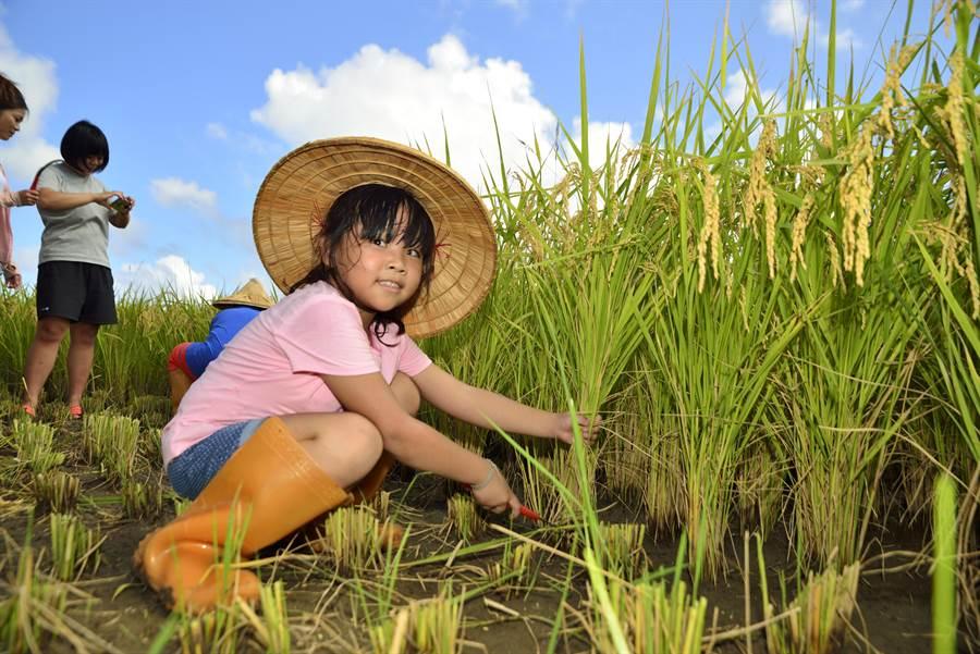 恆春龍水社區有機米打出名號,農糧署盼將恆春半島打造成有機半島。(恆春鎮農會提供)