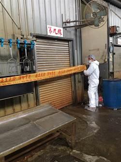新北禽屠宰場 驚現H5亞型高病原性禽流感
