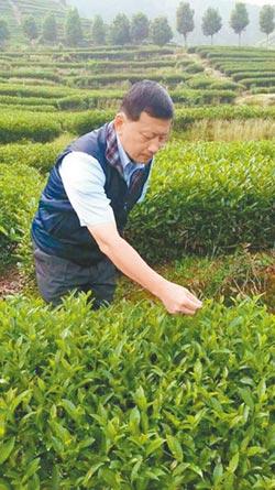 漳平台農茶品 金磚峰會指定用茶
