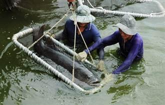 首張漁業保單獲理賠 漁民投保意願增