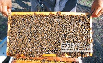 毒蛋+害死蜜蜂 芬普尼列禁藥