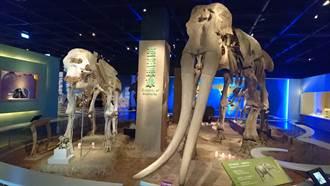 科博館暑假人潮暴增1倍 《象群》特展2個月創近12萬人次