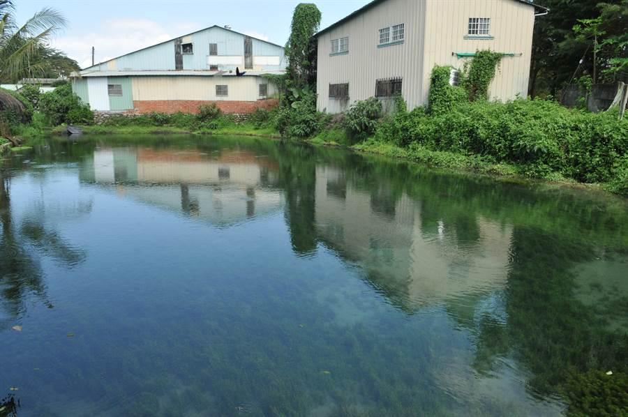 埔里鎮舊名「五港泉」的區域,地下水量相當豐富,有多處自然湧泉形成的沼澤。(廖肇祥攝)
