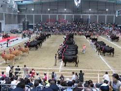 日本全國和牛大賽宮崎牛3連霸再奪肉牛冠軍、大分牛奪種牛冠軍