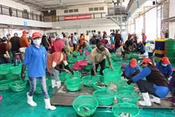 全國首座HACCP魚市場  蚵仔寮漁港邁向國際化