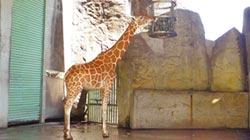 動物園防颱 毛小孩乖乖回房