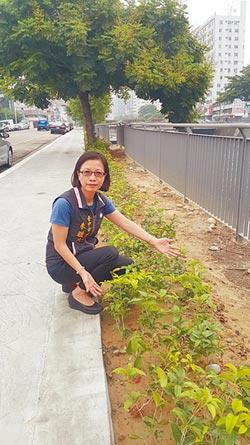 樹苗密度高 市府:改造綠籬