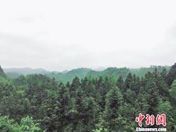 退休書記貸款種樹 荒山變林場