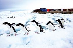 南極旅遊正夯