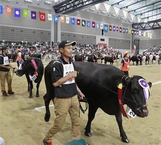 和牛奧運會金牌出爐 九州三縣市囊括大獎