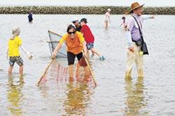 後龍合歡石滬 漁民每日巡補