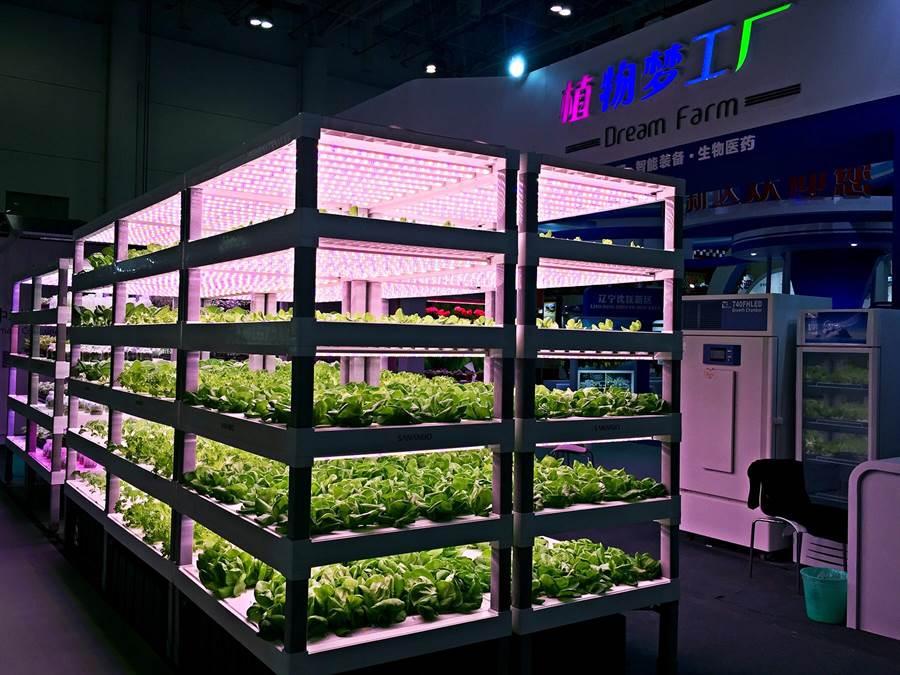 用光培養與生產的室內植物,中科三安的植物工廠也現身廈洽會展示。(王雅芬/攝)