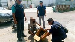 捕鼠籠抓食蛇龜  警救21隻二級保育類陸龜