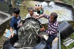 雙龍布農金國賓 無汙染祕境養出最棒香魚