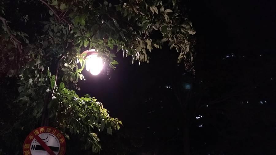 ZF4 Selfie Pro主鏡頭夜拍。(圖/黃慧雯攝)