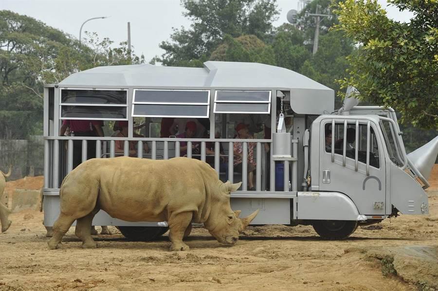 犀牛車取名「蘇丹犀望巴士」也有深遠涵義,六福旅遊集團希望每位搭乘犀牛車的乘客,都能從「蘇丹」的故事了解犀牛保育的重要。(圖/六福旅遊集團提供)