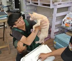市府與寵物店合作辦認養活動 今起至11月底免費認養