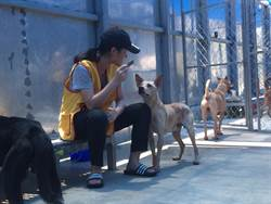 收容所爆量 志工廣徵愛狗人士來幫忙