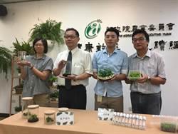 「綠球體」繁殖突破 蕨類將搶食10億元盆花市場