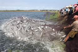 沿海養殖盛 北門農會賣魚飼料年營業額逾8000萬