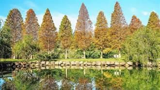 不用特地跑國外!這幾處秋遊美景沒看過絕對別說自己是台灣人!