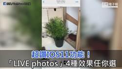 超讚IOS11功能! 「LIVE photos」4種效果任你選