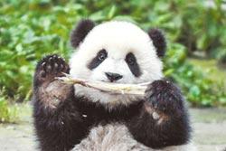陸徵颱風新名 皮皮蝦、熊貓入選