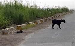 高山犬遭棄養河床 母狗伴枯骨守候