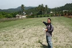 解決農作缺工問題  六龜青農引進第一台無人植保機