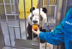 動物專屬月餅 大貓熊吃得好香