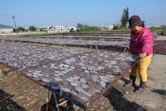 口湖展開扁魚乾製作 因應冬天火鍋旺季
