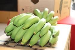 農委會啟動加工擴大採購 穩定香蕉產銷