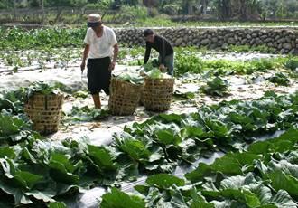 卡努颱風豪大雨 農政單位呼籲嚴防災害不少農民搶收
