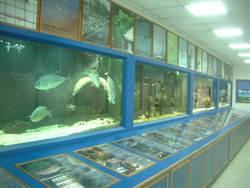 六輕生態實驗室 打造沿海小型水族館