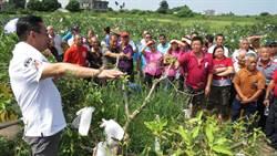 溪州芭樂傳病蟲害危機 農會邀專家傳授防治撇步