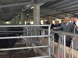 李登輝養牛 培育台灣和牛成功