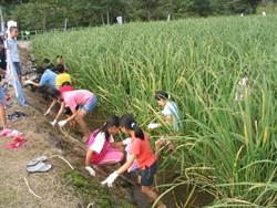 秋季限定 水梯田茭白筍採筍體驗活動開始報名