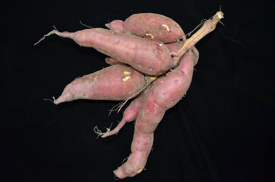 農試所成功培育出甘藷新品種「金香」,具有耐儲存、口感佳等優點,可望開拓外銷市場。(農試所提供)