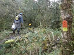 花蓮清水山步道 登山客遭虎頭蜂圍攻