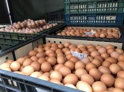 新竹抽驗蛋品含芬普尼 中盤商配合送回原廠封存
